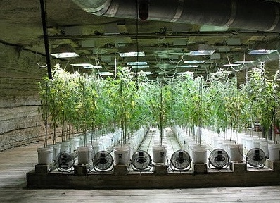 What-is-Hydroponics-Marijuana-Growing-and-How-to-Do-it